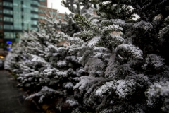 Broadgate Winter Forest (17)_preview